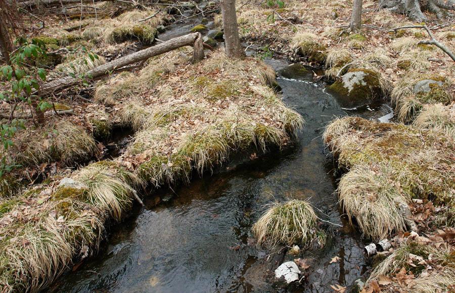 我跳我跳我跳跳跳 ps一下这棵孤独的大树,上半截长满了绿苔藓