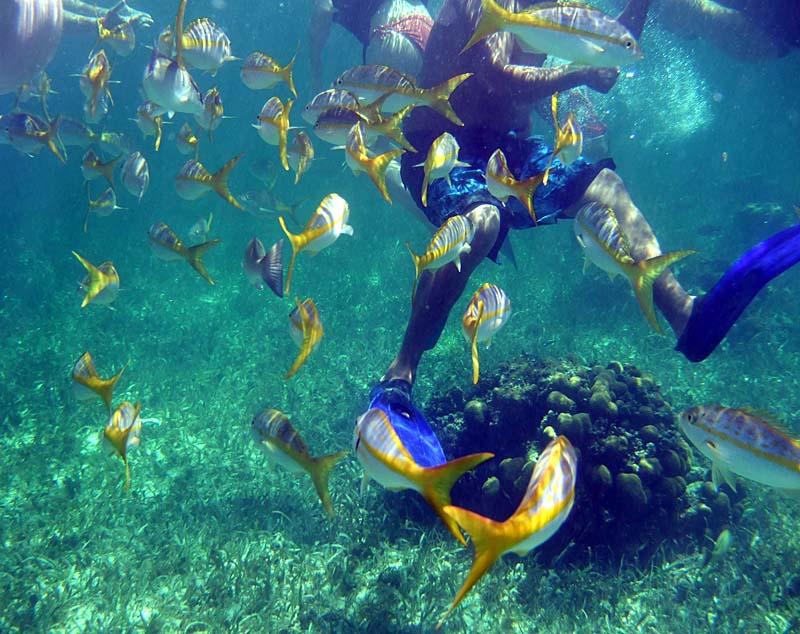 壁纸 海底 海底世界 海洋馆 水族馆 桌面 800_634